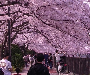 beautiful, cherry blossom, and kawaii image
