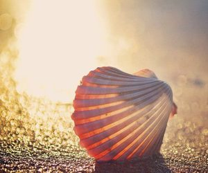 sand, shell, and summer image