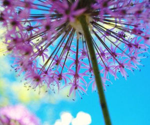 flowers, purple, and photography image