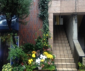 nature, plants, and street image