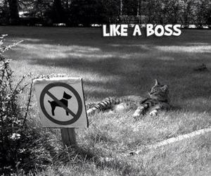 cat, black and white, and like a boss image