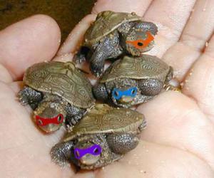 turtle, ninja turtles, and ninja image