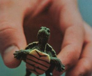 little, lovely, and turtle image