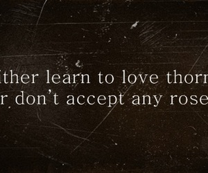 quote, rose, and love image