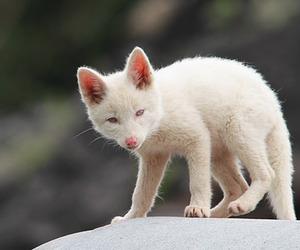 animal, aw, and cute image