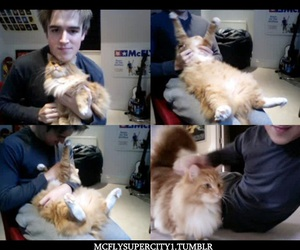 awn, Marvin, and cat image