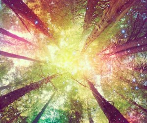 tree, forest, and magic image