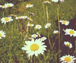 flower, pretty, and vintage image