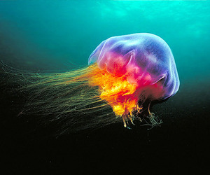 jellyfish, colorful, and colors image