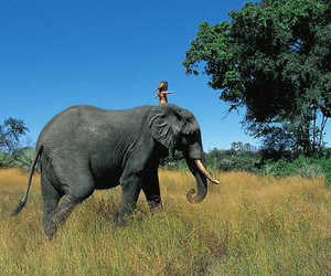 elephant, africa, and nature image