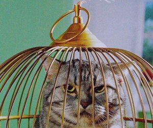 cat, bird, and cage image