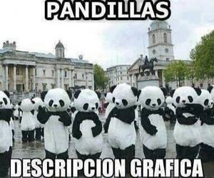 panda and pandilla image