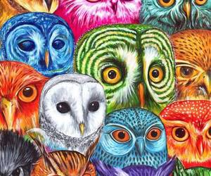 owl, pink, and rainbow image