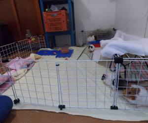 cage, guinea pig, and linda image