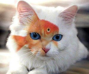 cat, fish, and cute image