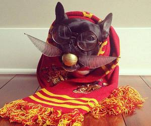 dog and harry potter image