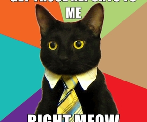 cat, funny, and meme image