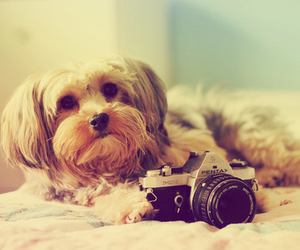 dog, cute, and photo image
