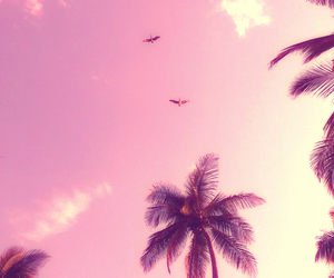 summer, bird, and pink image