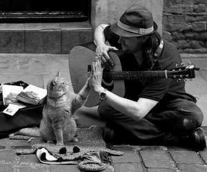 cat, guitar, and man image