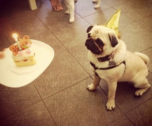 birthday, dog, and pug image