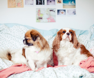 dog, puppies, and cute image