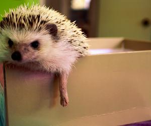 hedgehog and photo image