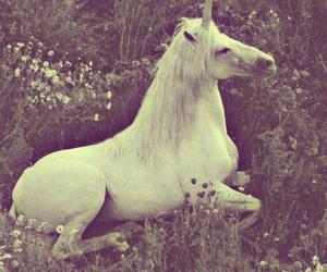 unicorn, horse, and flowers image