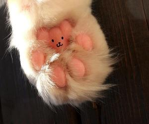 cat, paw, and cute image