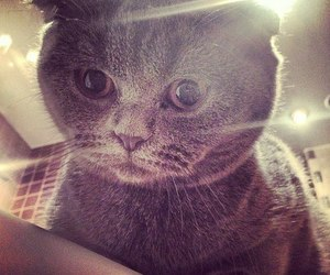 cat, cute, and swag image
