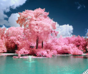 japan, pink, and trees image