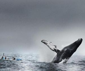 ocean and whale image