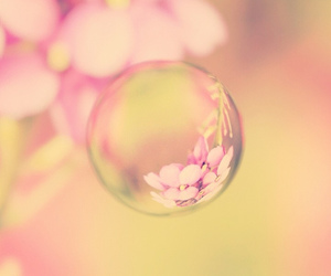 pink, flowers, and bubbles image