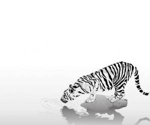 tiger, wallpaper, and white image