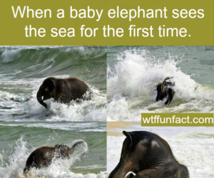 fact, baby, and elephant image