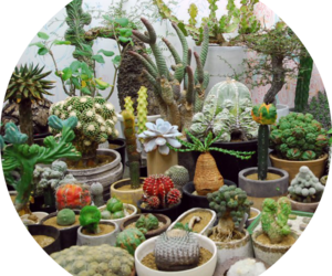 cactus, green, and greenhouse image