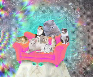 cat, kitty, and psychedelic image