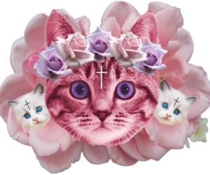 cat, cats, and flower image