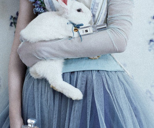 rabbit, alice, and blue image
