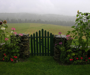 Fences, fields, and flowers image