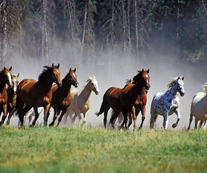 horse, animal, and free image