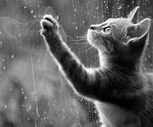 black and white, cute, and cat image
