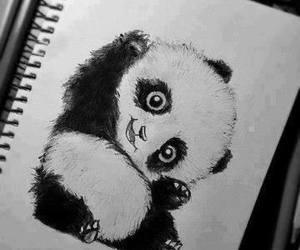 draw, pandas, and cute image