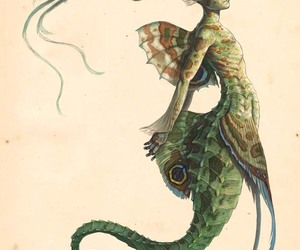 mermaid, creature, and drawing image
