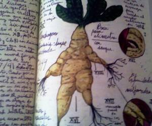 book, magic, and mandragora image