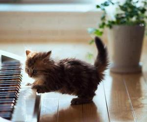 cat, cute, and piano image