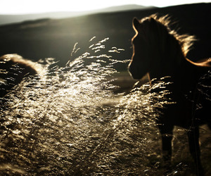 horse, animal, and sun image