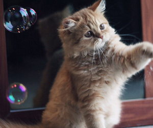bubbles and kitten image