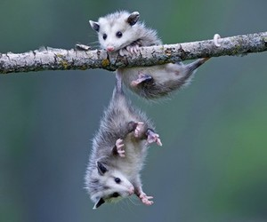 animals, funny, and cute image