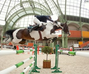 cheval, jumping, and pie image